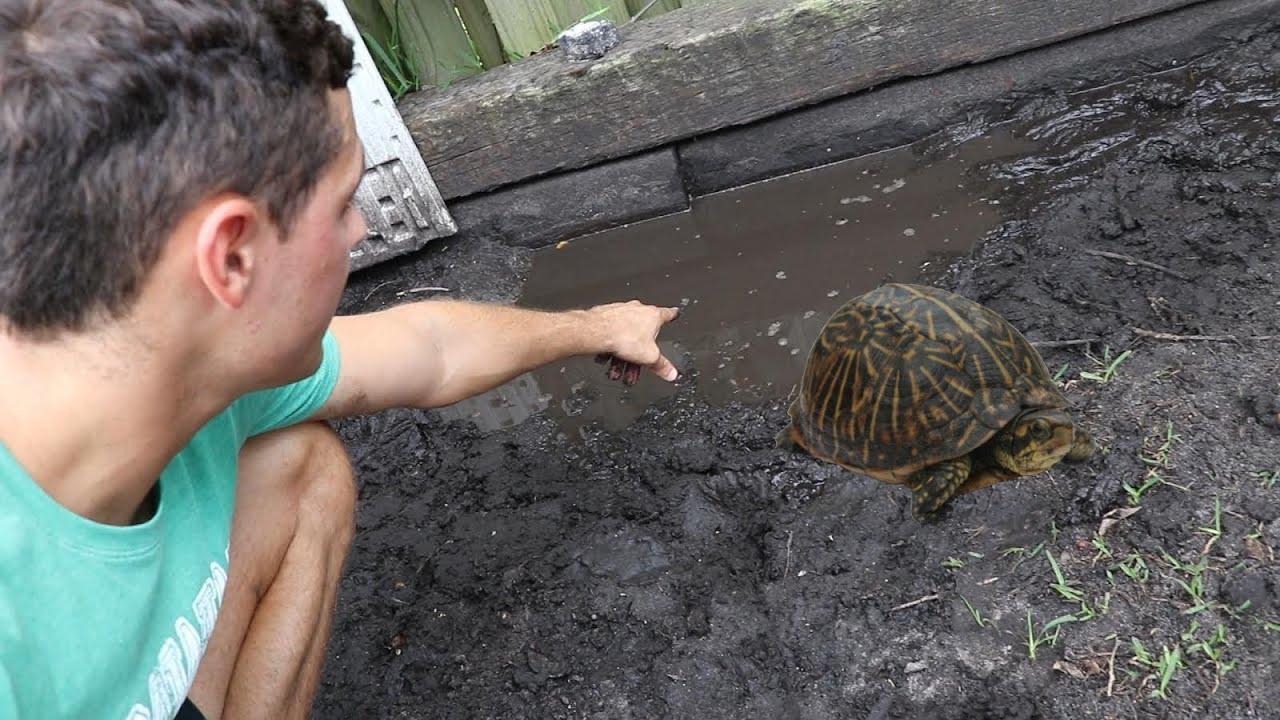 SAVING Baby Turtles From Nasty Tar Water!