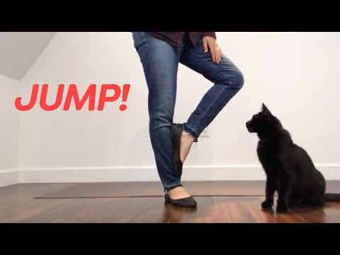 Cat Trick: Teach your cat to Jump Through Your Legs