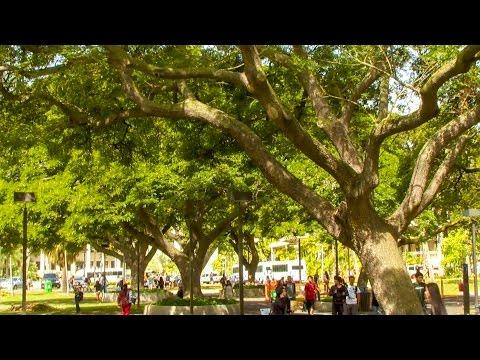 UH Mānoa campus an accredited arboretum