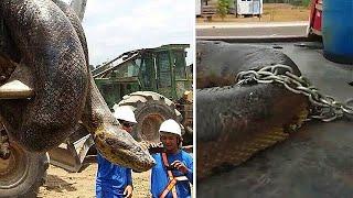 Строители взорвали пещеру и к ним прилетела гигантская змея!