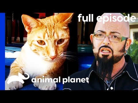 This Kitty Keeps Attacking His Owners! | My Cat From Hell (Full Episode)