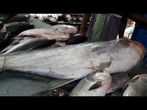 Incredible Fish Aroth | Wholesale Fish Market Karwan Bazar Dhaka Bangladesh