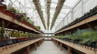 Tropicals & Succulents Commercial