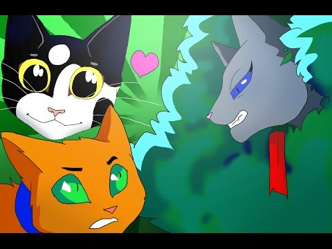 Пары котов воителей:) смотреть видео онлайн!