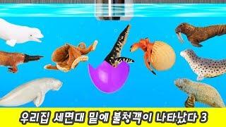 한국어ㅣ우리집 세면대 밑에 불청객이 나타났다 3, 유아 동물만화,  해양동물 이름 외우기ㅣ꼬꼬스토이