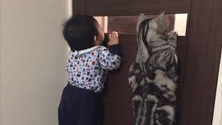 Смешные коты приколы с котами – КОШКИ 2019 #4