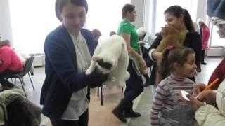 Видео с выставки кошек в Кирове  6 февраля 2016 года