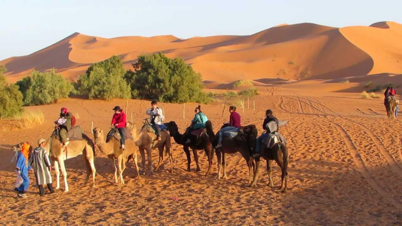 Camel Caravan leaving for the desert - YouTube