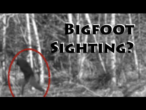 Remote Forest Boondocking & Bigfoot Sighting