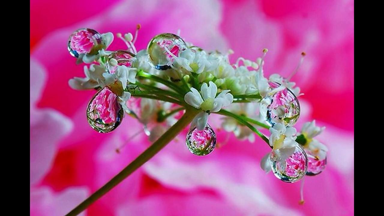 усугублять красивые картинки цветы в росе окраска приобретается