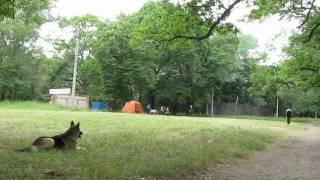Соревнования ВН г.Лисичанск 2011_06_11 Мухтар 51 балл