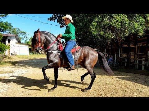 Características del Caballo Peninsular Piropo- TvAgro por Juan Gonzalo Angel