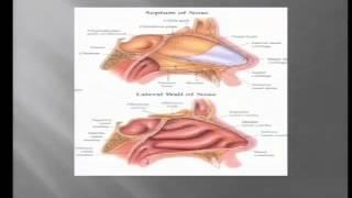 Surgical Advances for Obstructive Sleep Apnea OSA, 4/1/15