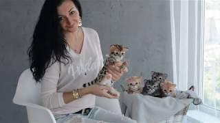 -Elena Fedoryak- Больше, чем просто игрушки. Котенок