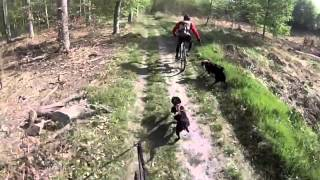 Bike Joring With Staffordshire Bull Terrier In France
