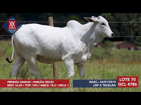 LOTE 70 GCL 4786