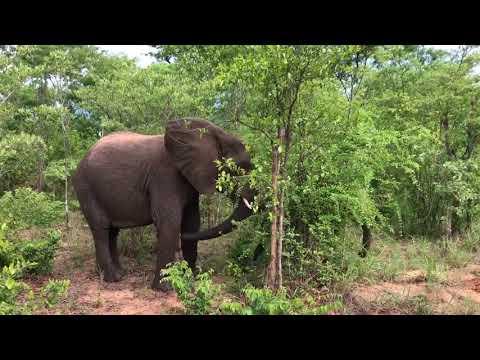 Mother and baby elephants, near Hwange, Zimbabwe