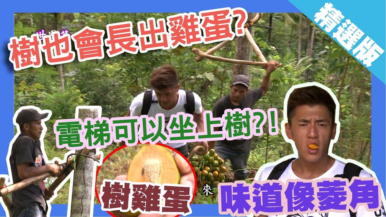 【巴拿馬】人工樹電梯 上樹找尋雞蛋果|《世界第一等》631集精華版