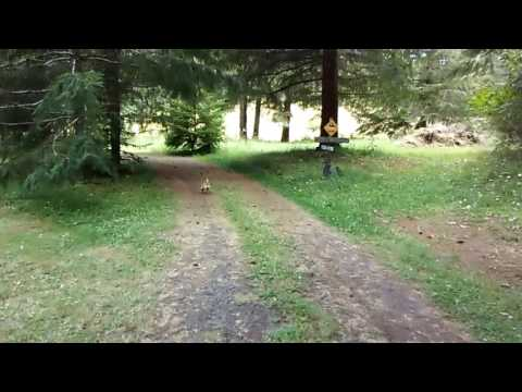 chihuahua-saves-owner-from-prehistoric-bird-attack