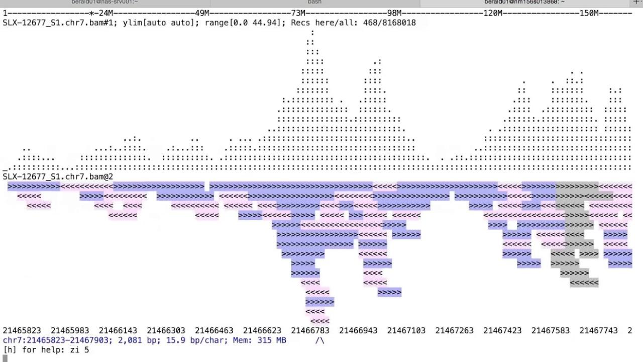 Examples — ASCIIGenome 0 1 0 documentation