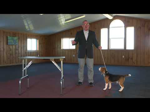 Dog Show Tips- The No Fuss Stack (Small Dog)