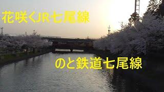 花咲くJR七尾線、のと鉄道七尾線