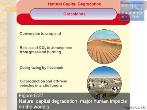 terrestrial ecology 6