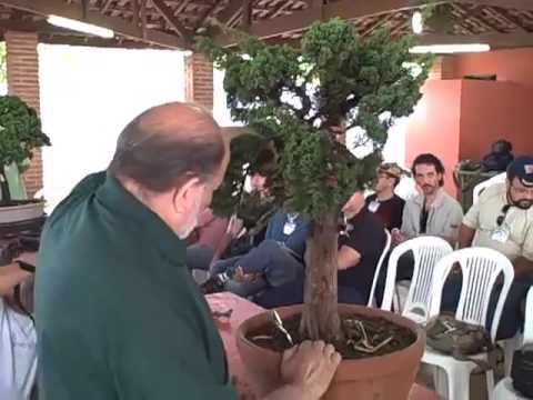 Bonsai 2009 Chase Rosade Eua Parte 2 Youtube