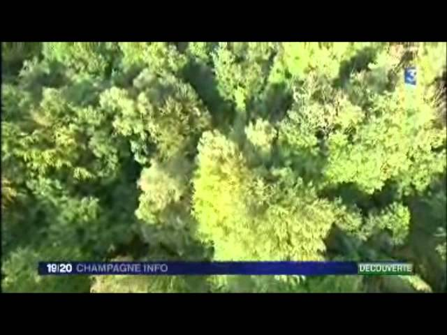 Vol montgolfiere au dessus de la Montagne de Reims