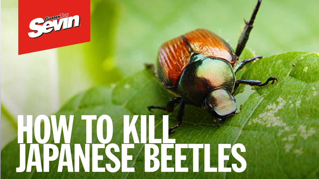 Kill over 500 insects - Sevin® Insect Killer Concentrate | Sevin