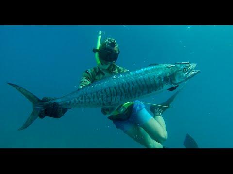 ABSea-TV - Spearfishing NW Australia