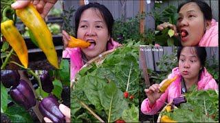 Ăn ớt chuối sống,ăn cherry trên cây,thu họach xà lách ớt cay ớt chuông,dâu tây, vườn thần tiên Mỹ