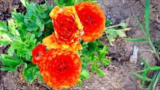 Израиль природа море цветов ישראל טבע שדה פרחים