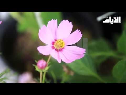 انطلاق معرض الزهور ونباتات الزينة تزامناً مع احتفالات العيد الوطني  - نشر قبل 4 ساعة