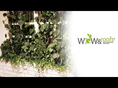 Озеленение офиса, дизайн офиса