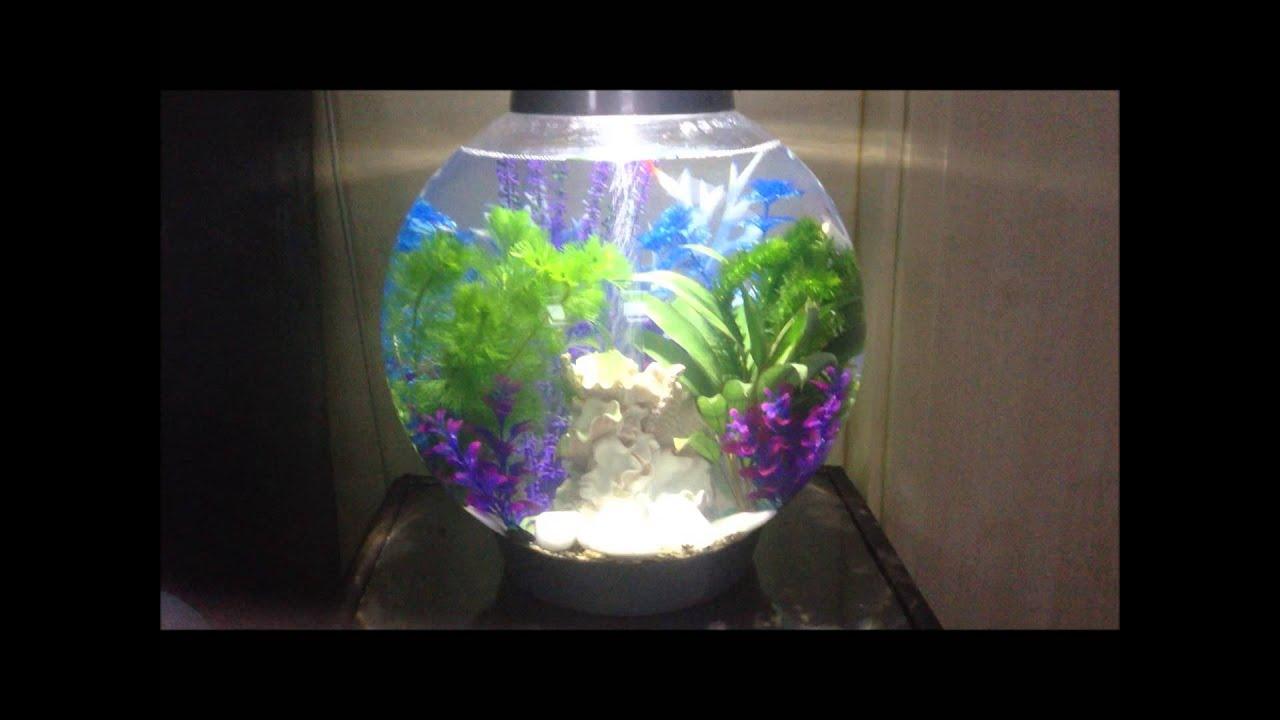 Baby Biorb 30l Fishtank Tropical Aquarium Planted Youtube