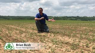 Soybean Stand Evaluation