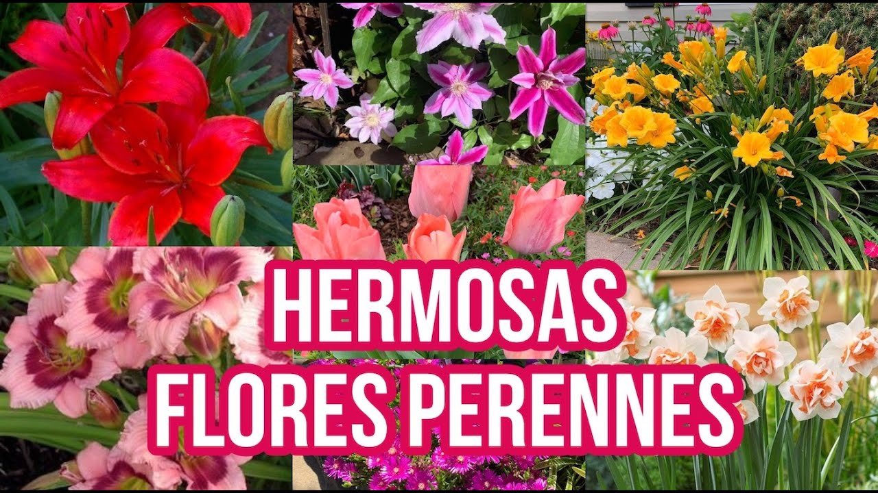 Download Hermosas Flores Perennes
