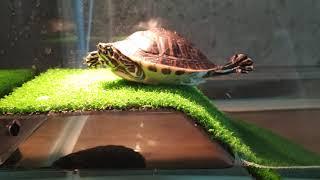 3마리 거북이들의 일생