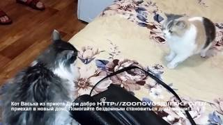 Усыновили бездомного кота из приюта счастливчик Котик Васька из приюта Дари добро в Новосибирске