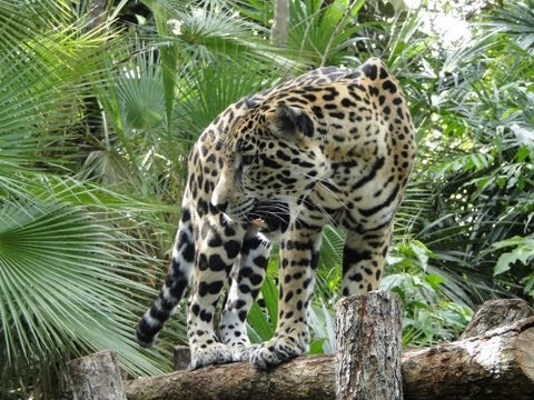 Belize Zoo, Belize Zoo in Central America