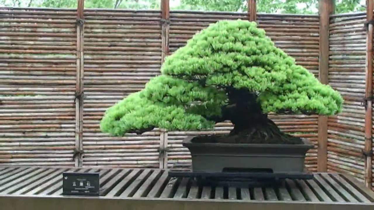 bonsai baum als perfekte dekoidee für den indoor-garten, Gartengerate ideen