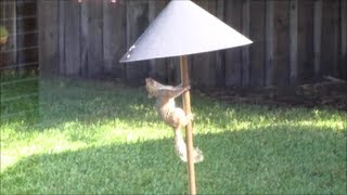 Test Of Squirrel Baffle - Keep Squirrels Out Of Your Bird Feeders!