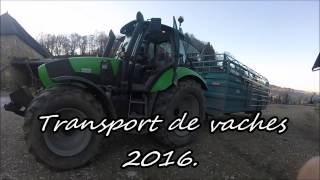 [gopro] transport de vaches 2016