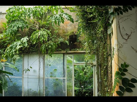 Ep 065: Fairchild Botanic Garden Tour Q2 2018 - Plant One On Me