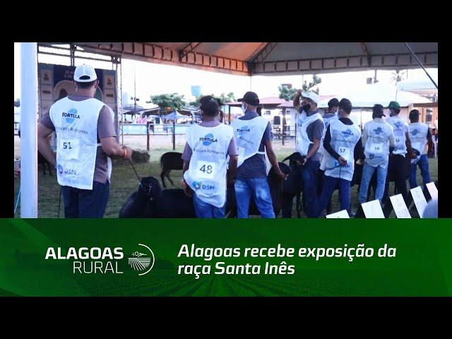 Alagoas recebe exposição da raça Santa Inês