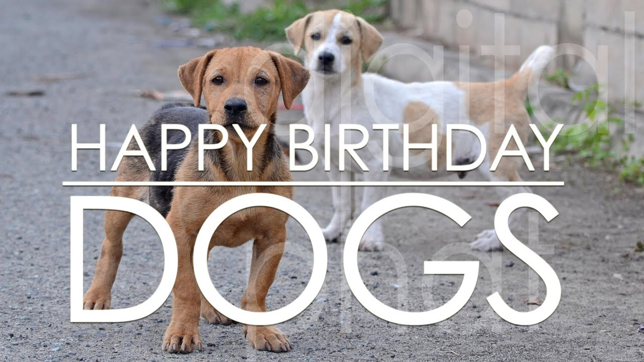Happy Birthday Song Plays And Dogs Behaving Weird Youtube