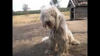 Annamaria & Hunde 2013(2)