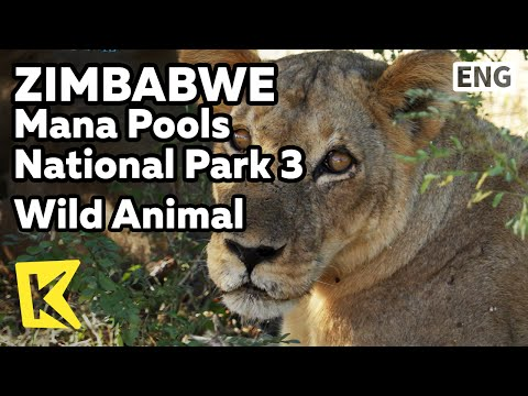 【K】Zimbabwe Travel-[짐바브웨 여행]마나풀스 국립공원 3 눈 앞에서 보는 야생동물/Wild/Animal/Safari/Unesco