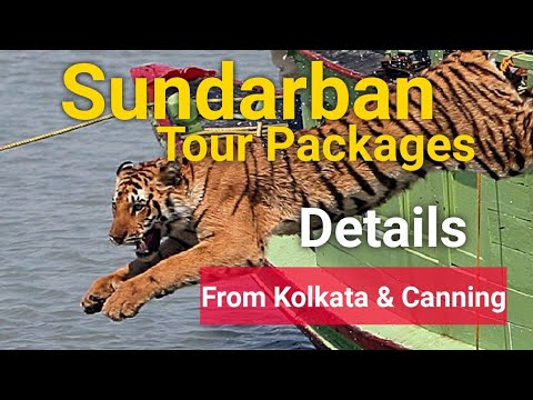 Sundarban tour package |sundarban package tour from kolkata